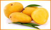 Mango Wholesale Buyers In Bangalore